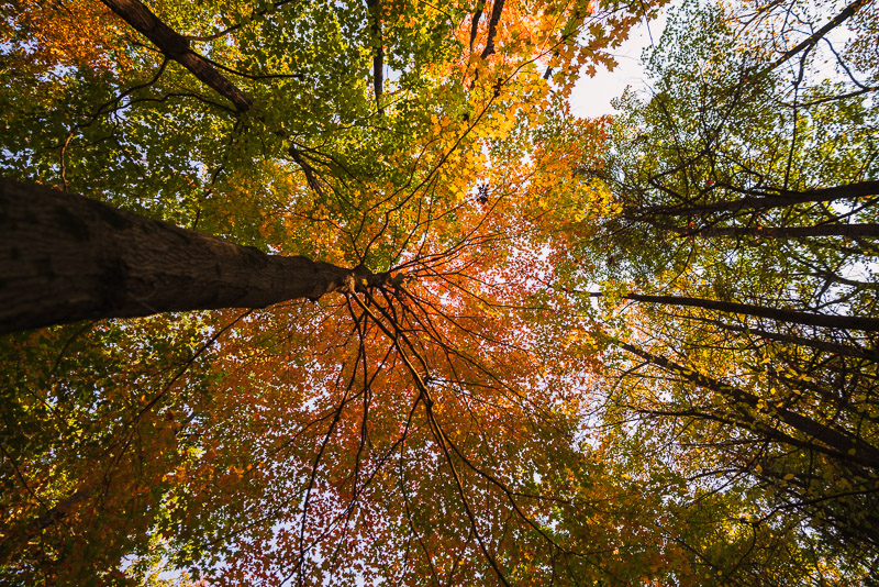 Art of slow living means getting out in nature, pausing to look up. Shot by Bryan Brattlof, Amherst, MA.