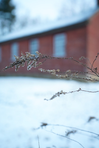 Flowers sway and bend with a snowy backdrop, the schoolhouse in the back.