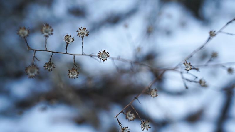 Flowers bend in the winter season