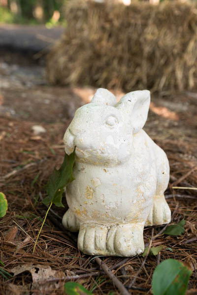 We found a ceramic bunny on the trail. We gave him a leaf to eat just in case he was hungry.