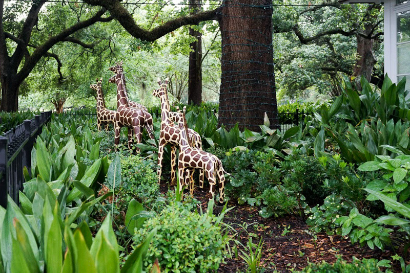 Three wooden giraffes stand in the yard underneath a spring canopy at Audubon Park in New Orleans.